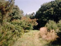 Arborétum Tata - Agostyán Tata