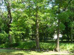 Kaštieľový park - Borsodivánka  Borsodivánka