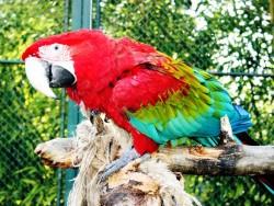 Zoologická a botanická záhrada - Jászberény Jászberény