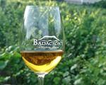 Víno Badacsony
