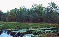 Prírodný národného parku Nagyberek Fonyód