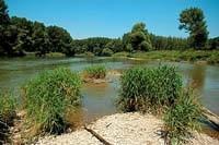 Lipót - mŕtve rameno Dunaja