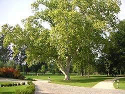 Park zámečku