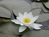 Tisza - rostlinstvo