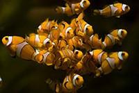 Mořské akvárium Zamárdi